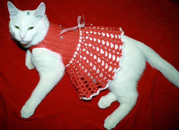 одежда для кошки вязанная выкройка