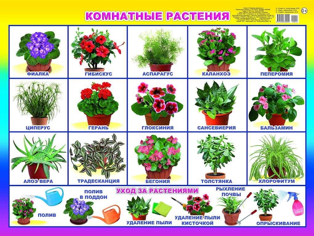 Комнатный цветок для детей