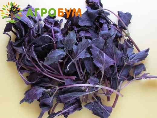 Купить семена Базилик Фиолетовый 0,3 г по низкой цене, доставка почтой наложенным платежом по России, курьером по Москве - интернет-магазин АгроБум