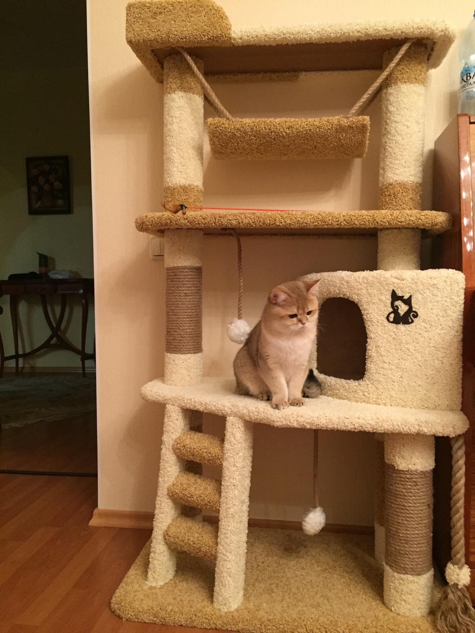 Многоуровневый кошачий домик своими руками 31