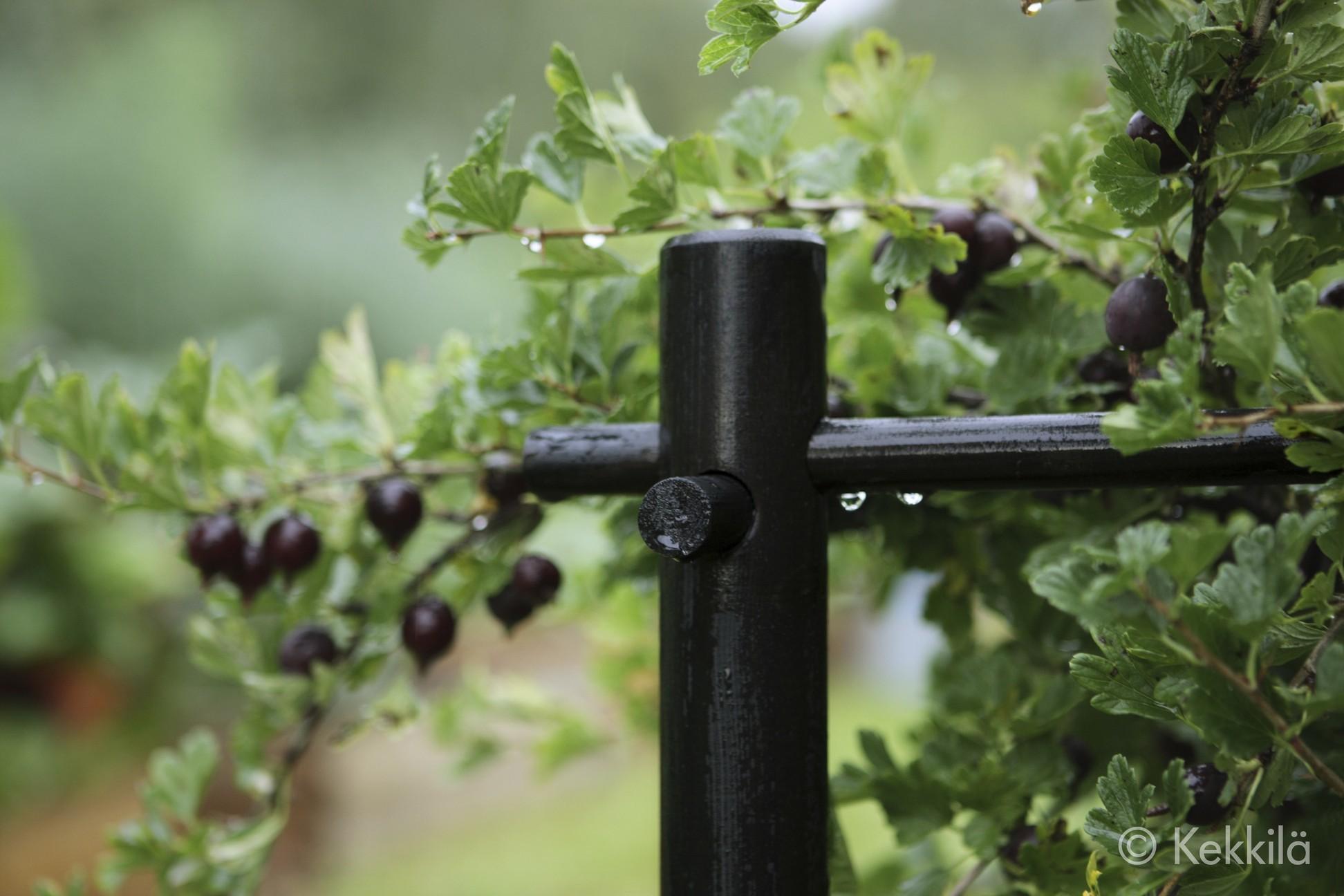 Как сделать ограждение для кустов смородины