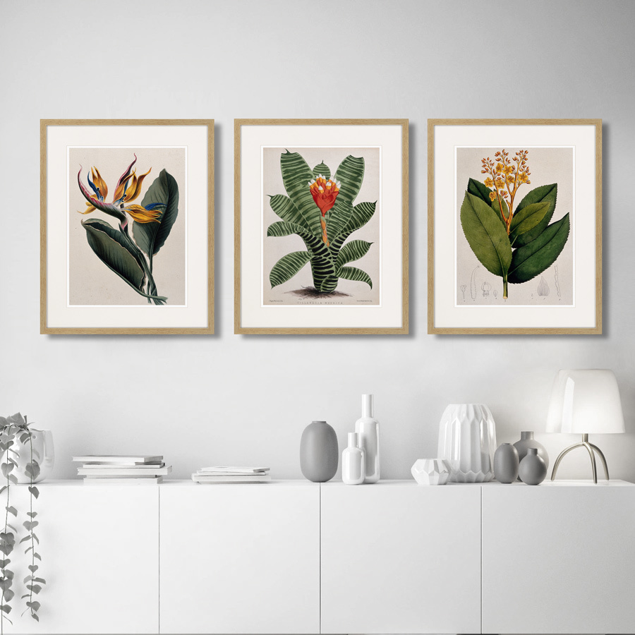 Exotic plants of the world №4, 1815г.
