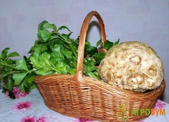 Купить семена Сельдерей Есаул, корневой 0,3 г по низкой цене, доставка почтой наложенным платежом по России, курьером по Москве - интернет-магазин АгроБум