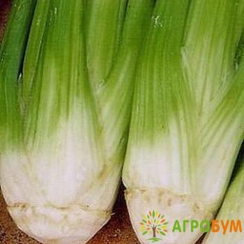 Купить семена Сельдерей Паскаль, черешковый 0,3 г по низкой цене, доставка почтой наложенным платежом по России, курьером по Москве - интернет-магазин АгроБум