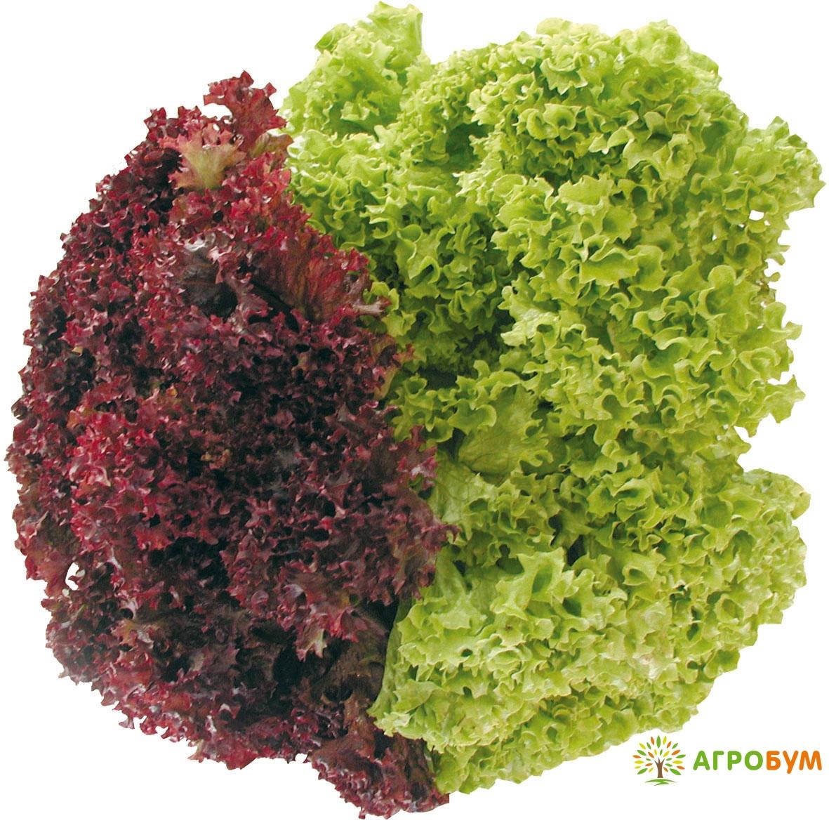 Купить семена Салат Разноцветное кружево 1,0 г по низкой цене, доставка почтой наложенным платежом по России, курьером по Москве - интернет-магазин АгроБум