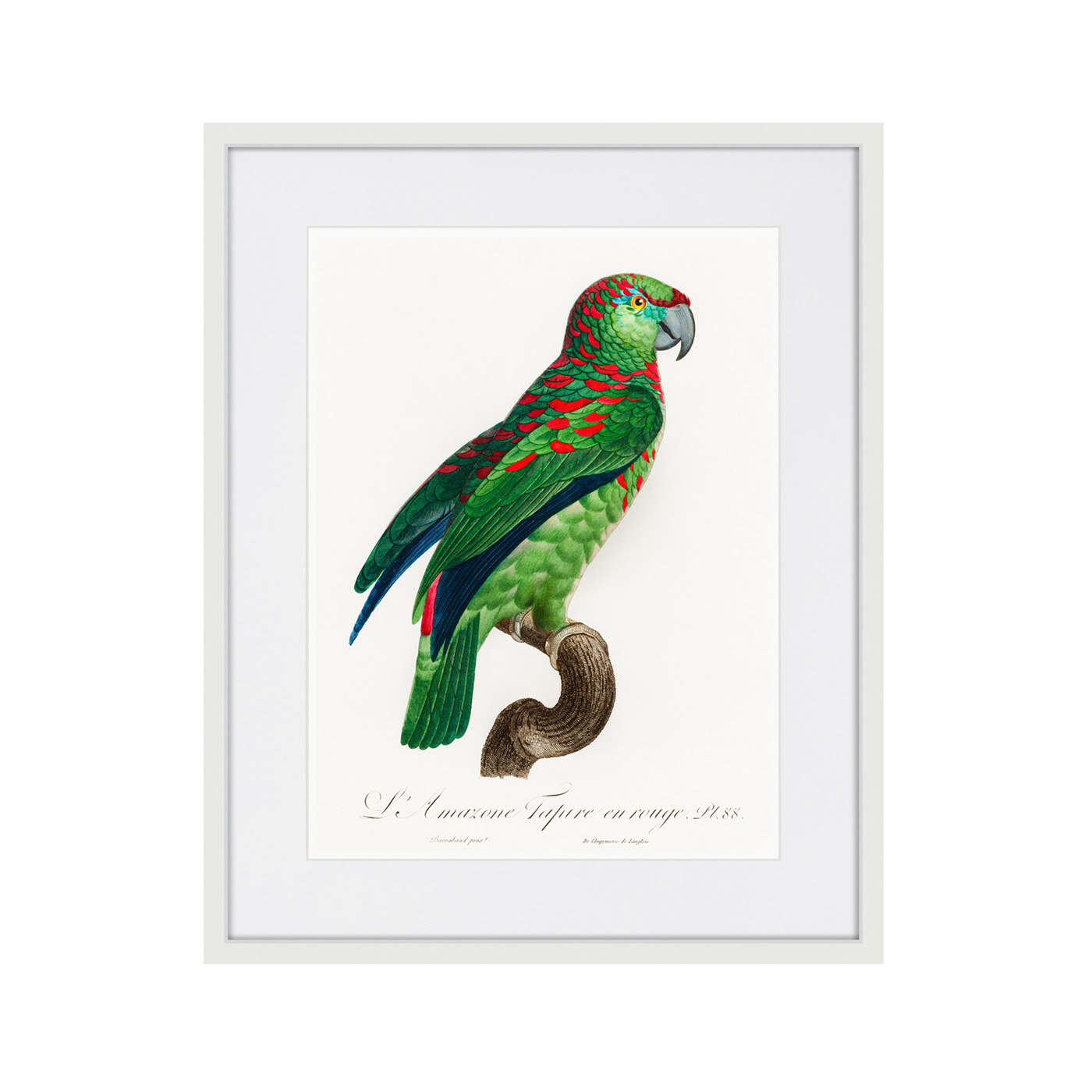 Beautiful parrots №4, 1872г.