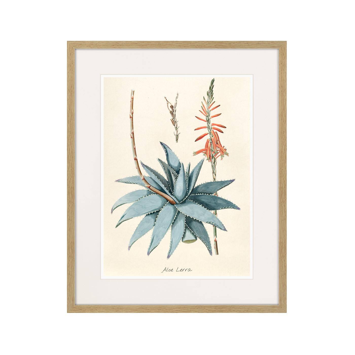 Fragmenta botanica №7, 1809г.
