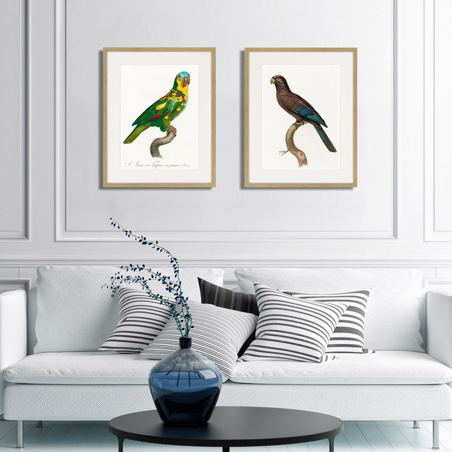 Beautiful parrots №11, 1872г.