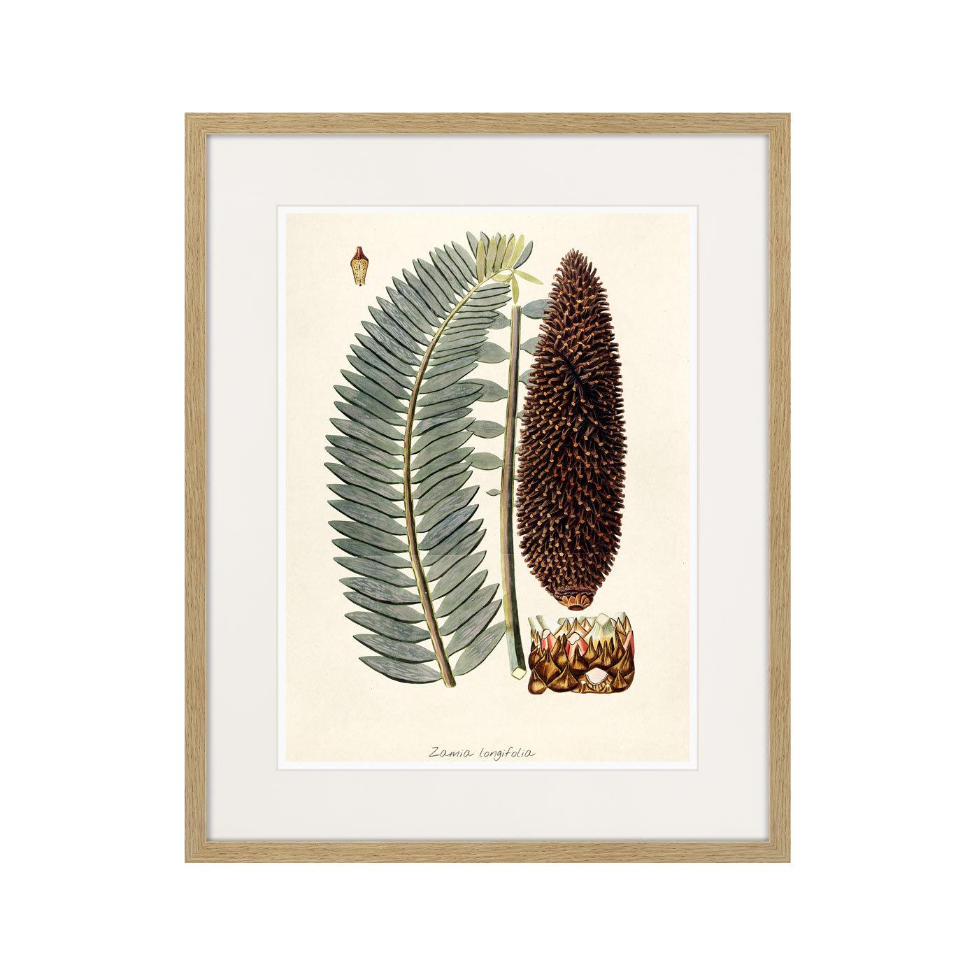 Fragmenta botanica №5, 1809г.