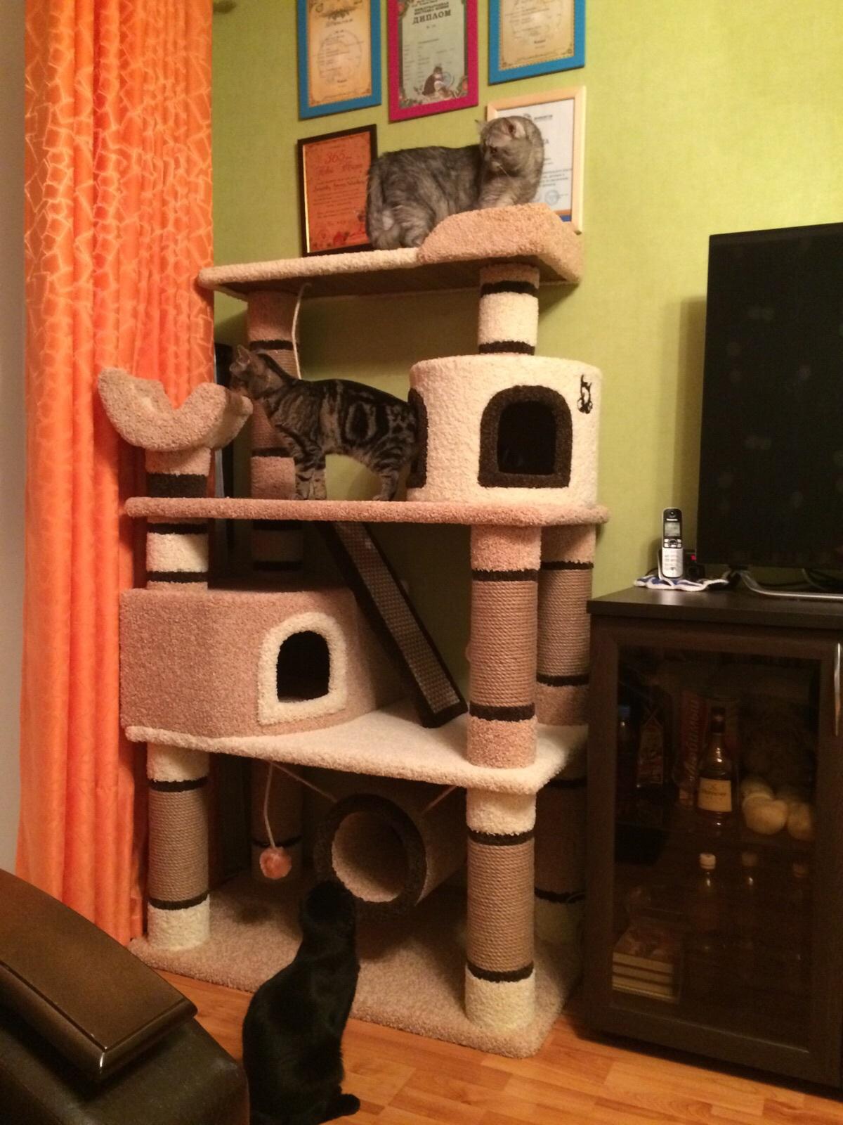 Как сделать дом для кота большой