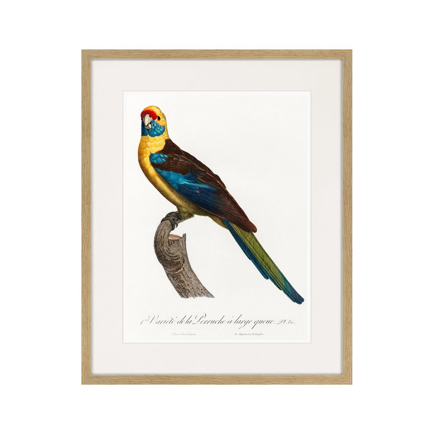 Beautiful parrots №12, 1872г.