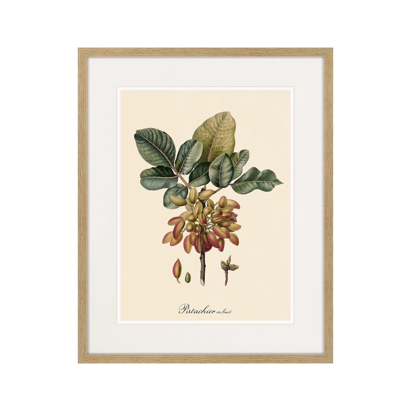 Juicy fruit lithography №8, 1870г.