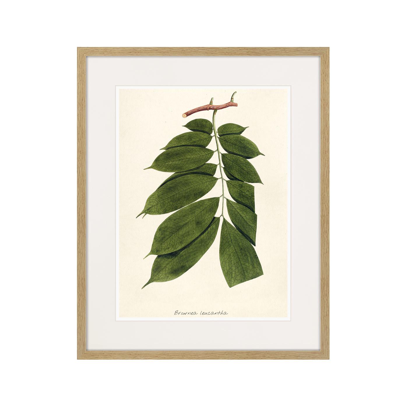 Fragmenta botanica №10, 1809г.