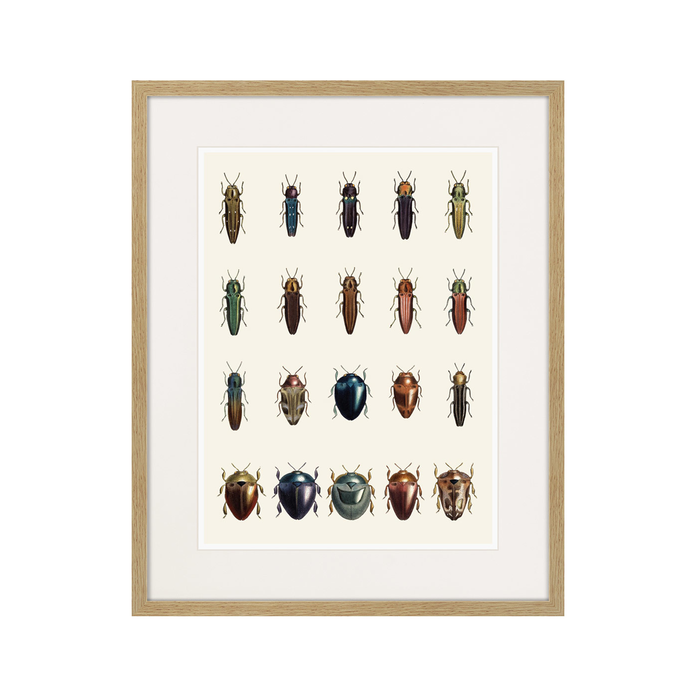 Assorted Beetles №3, 1735г.