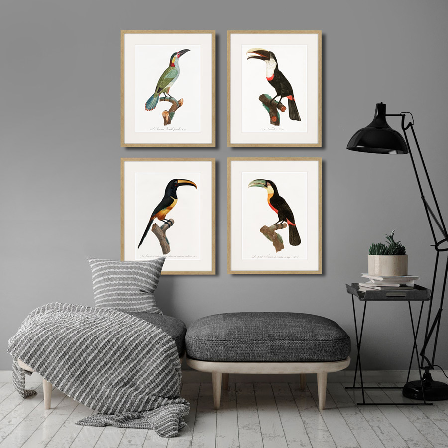 Beautiful toucans №3, 1806г.