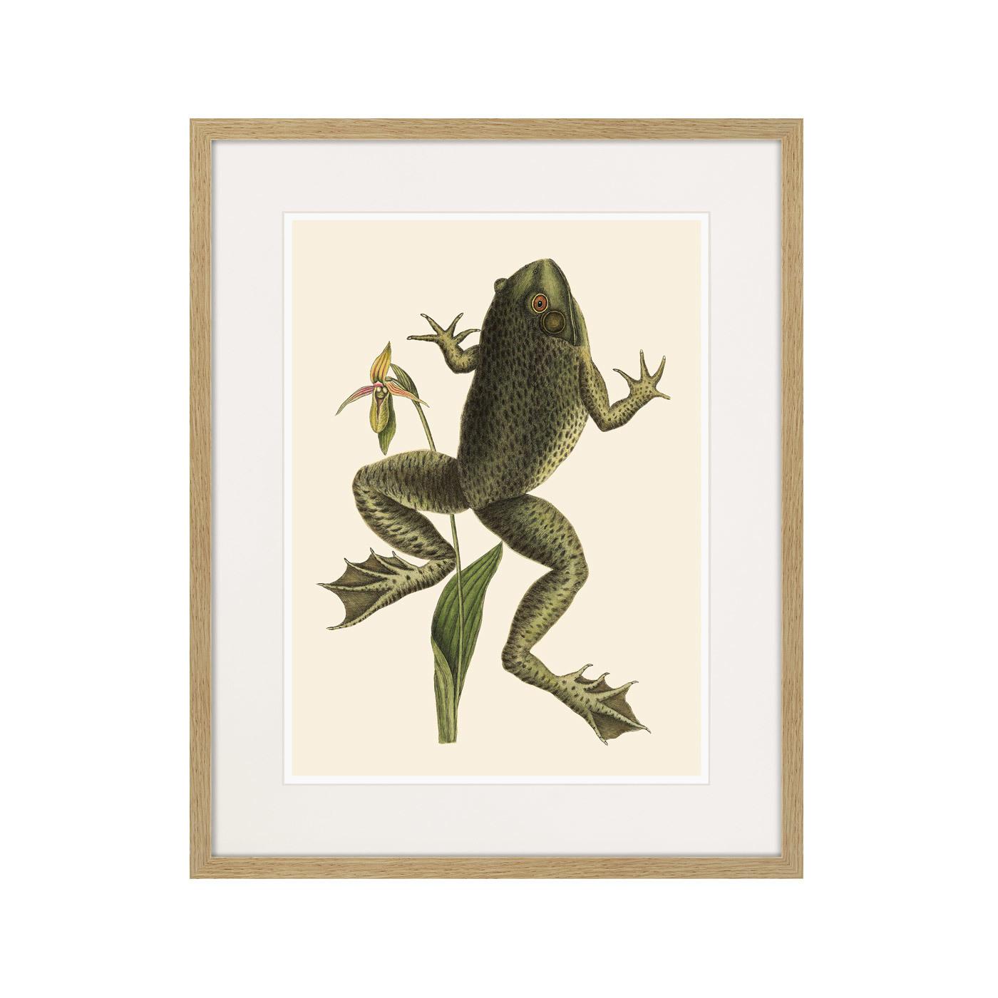 Big jumping frog, 1745г.