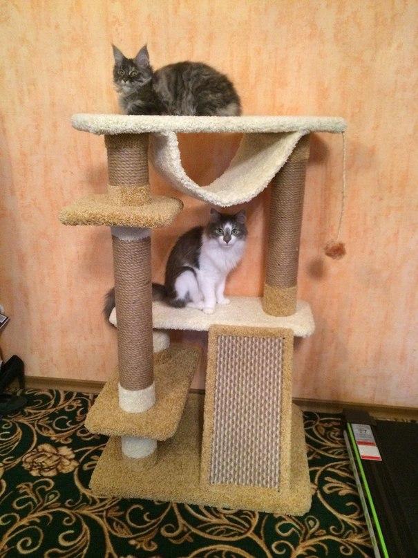 Когтеточка для кошек своими руками пошагово 73