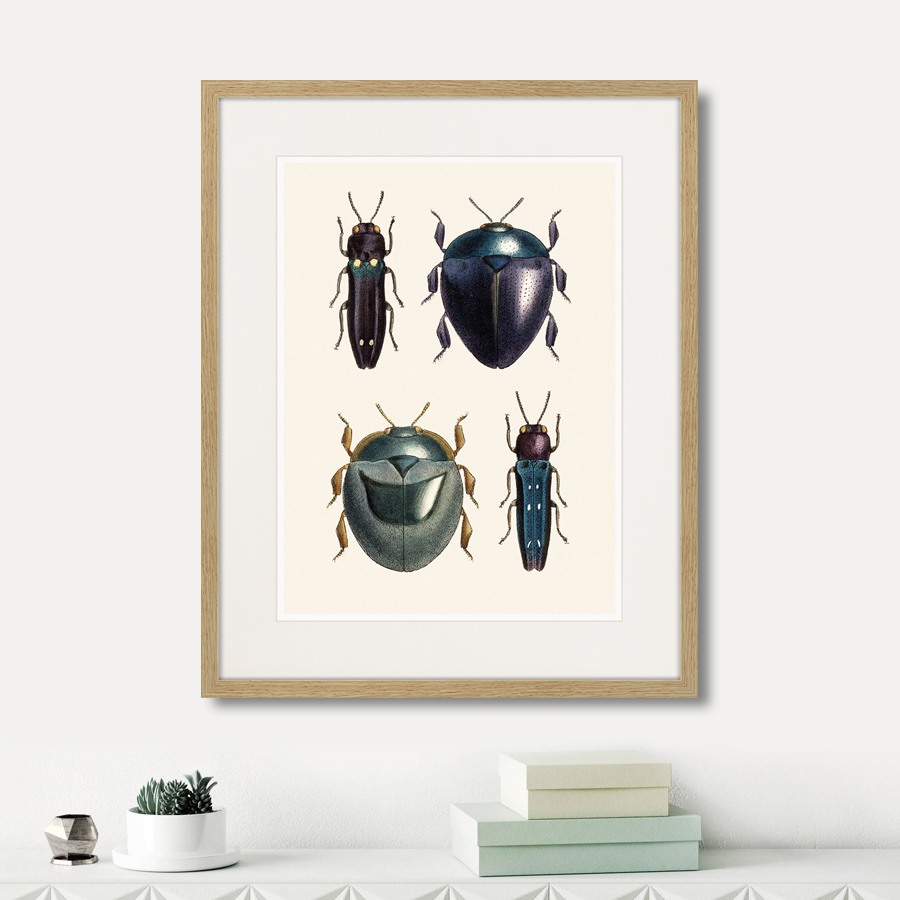 Assorted Beetles №1, 1735г.