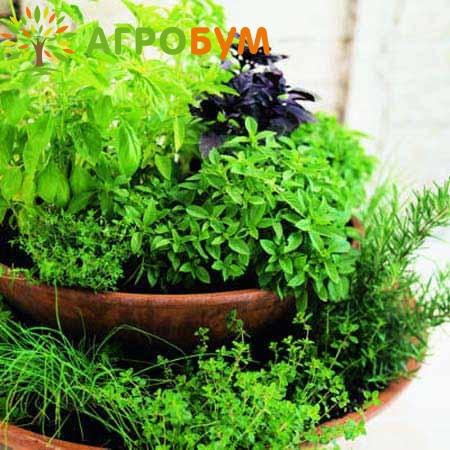Купить семена Кухонные травы 3г. по низкой цене, доставка почтой наложенным платежом по России, курьером по Москве - интернет-магазин АгроБум