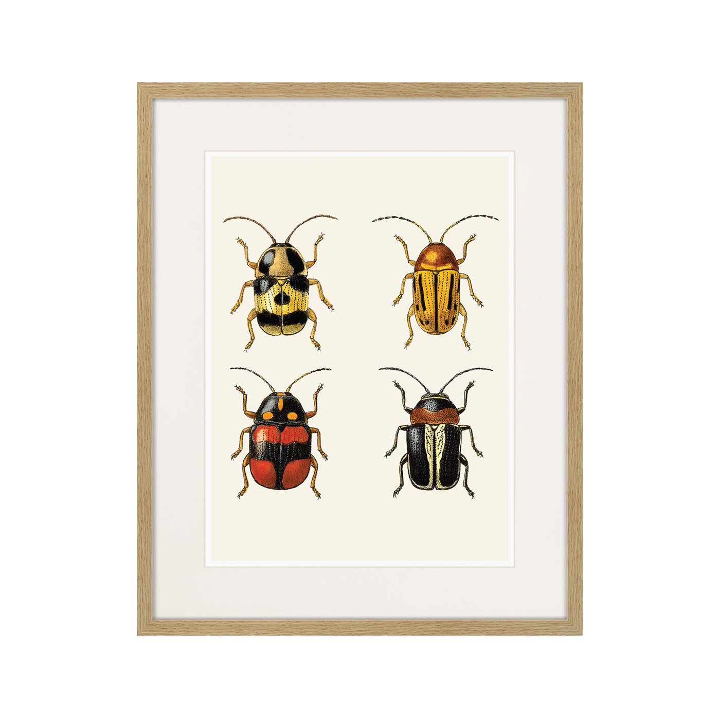 Assorted Beetles №6, 1735г.