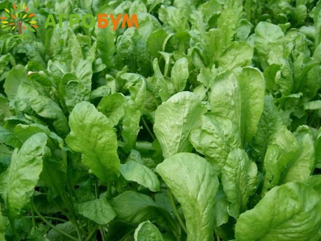 Купить семена Кресс-салат Дукат 1,0 г по низкой цене, доставка почтой наложенным платежом по России, курьером по Москве   - интернет-магазин АгроБум