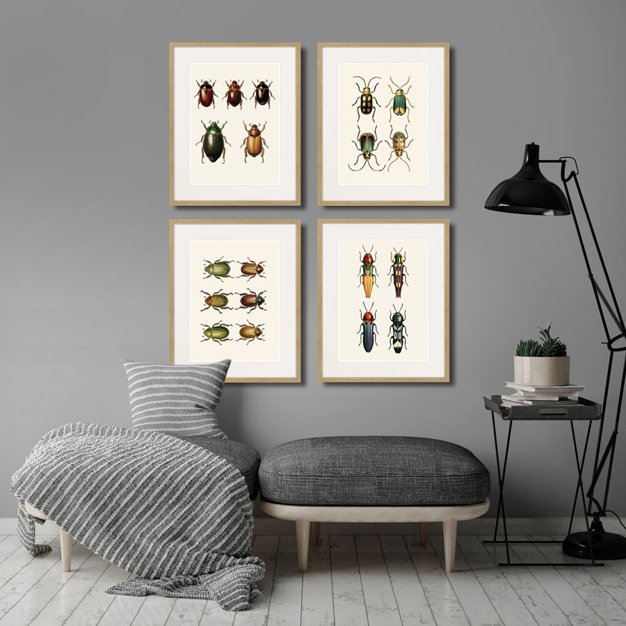 Assorted Beetles №11, 1735г.