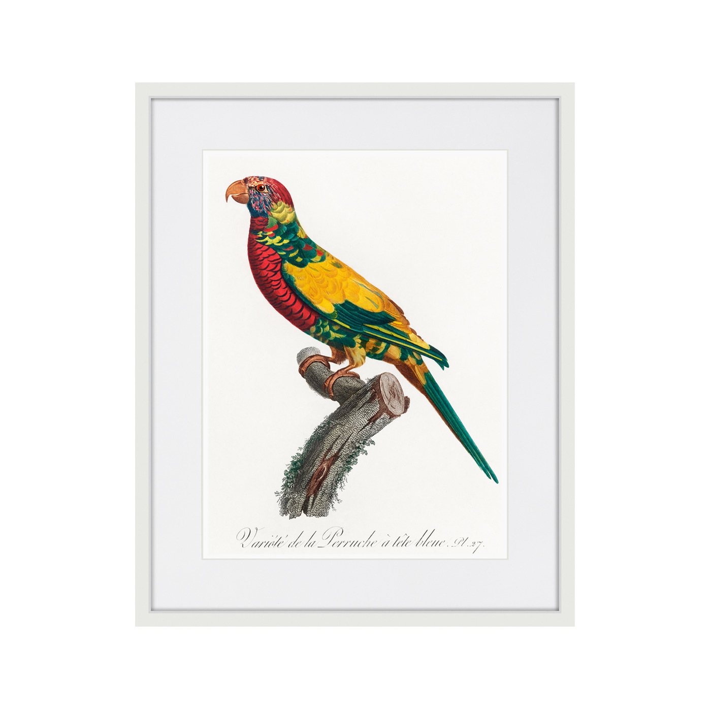Beautiful parrots №7, 1872г.