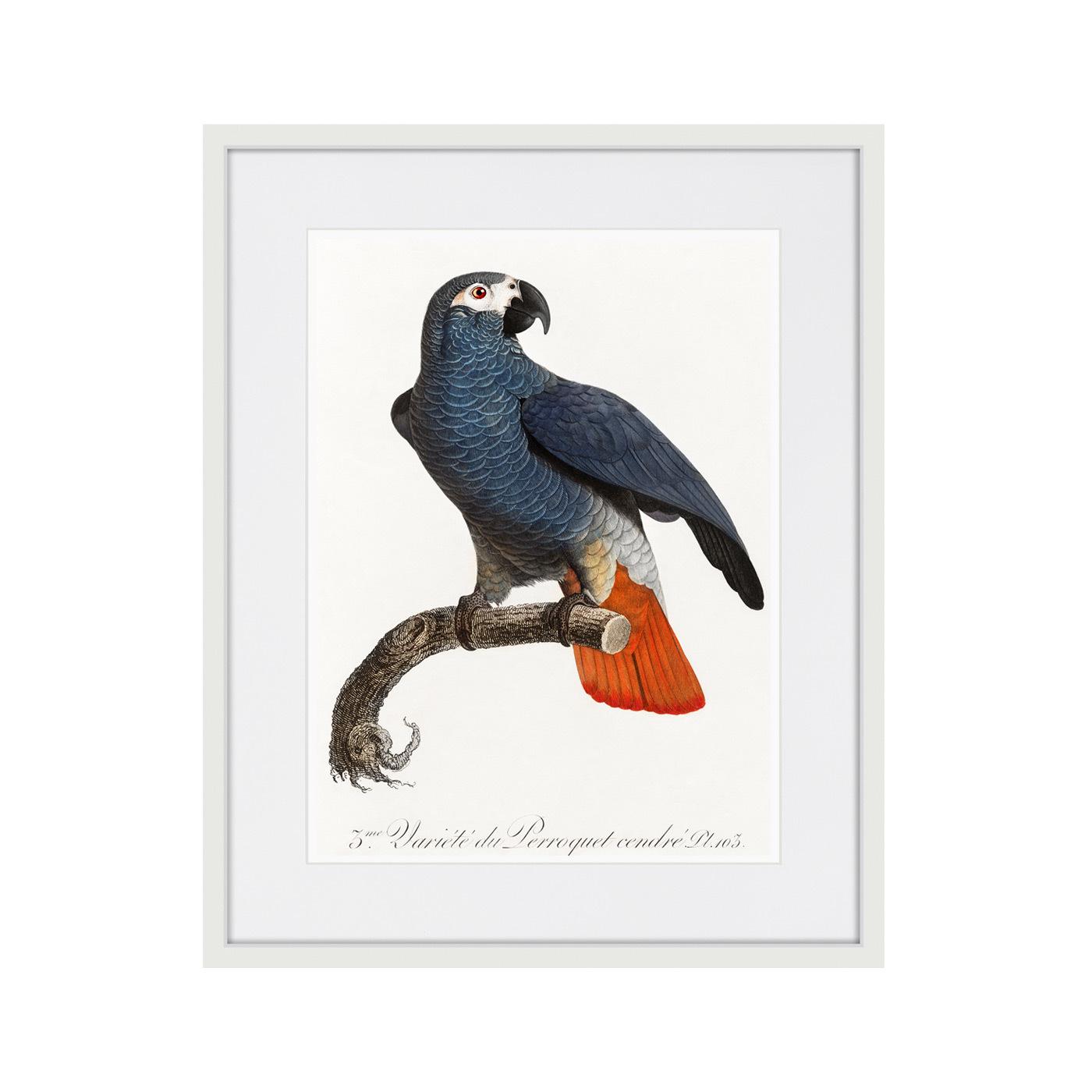 Beautiful parrots №5, 1872г.