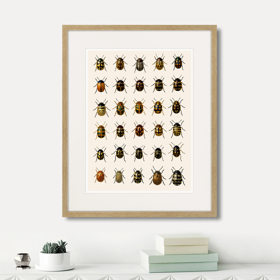 Assorted Beetles №2, 1735г.