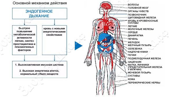 trenajer-dlya-dyhaniya-samozdrav.jpg