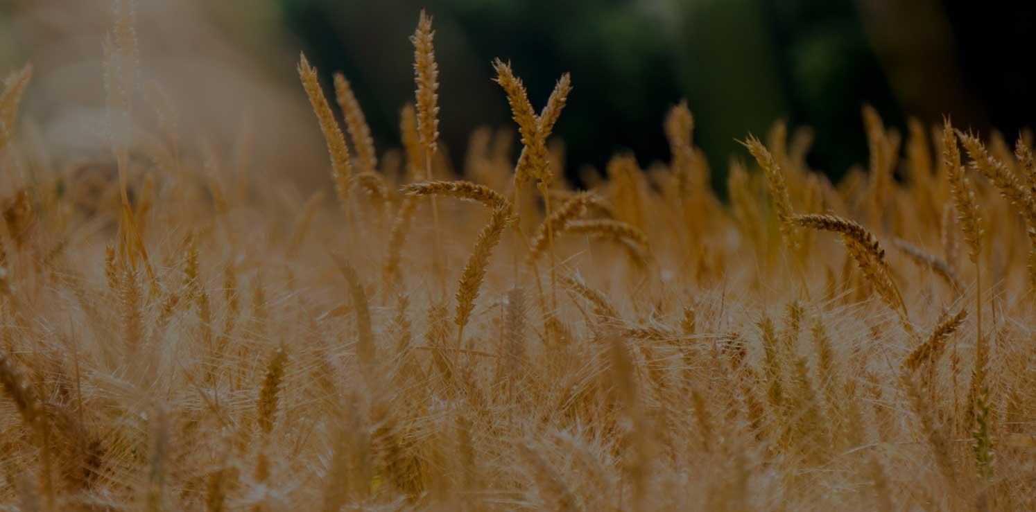 Растительные масла — источник полиненасыщенных жирных кислот,<br> а жиры — обязательный элемент сбалансированного питания. Регулярное<br>употребление растительных масел хорошего качества по две столовые ложки в день — способно улучшить мозговую и сердечно-сосудистую деятельность, очистить организм от шлаков и токсинов, а также повысить иммунитет.