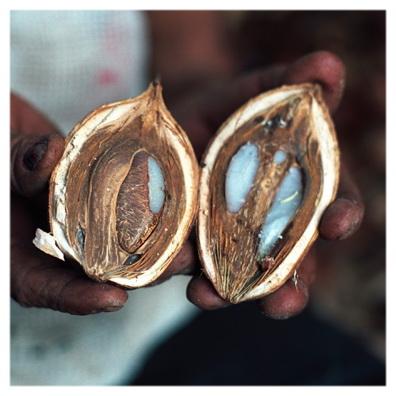 Орехи пальмы бабассу