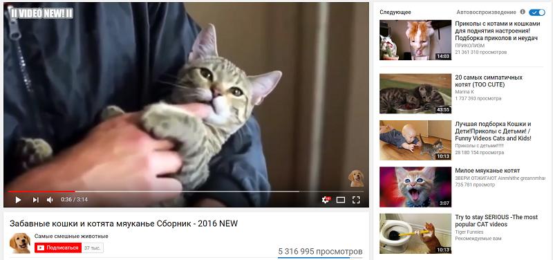 видео котята