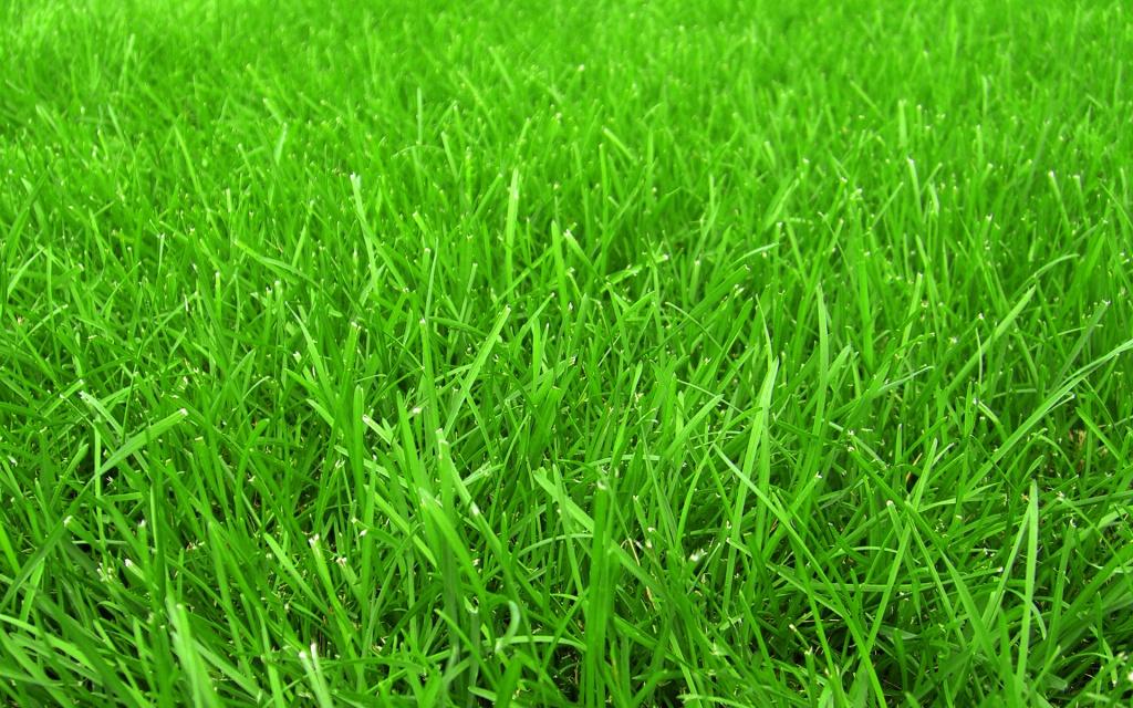 Газон и травы