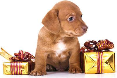 Подарки как правильно дарить