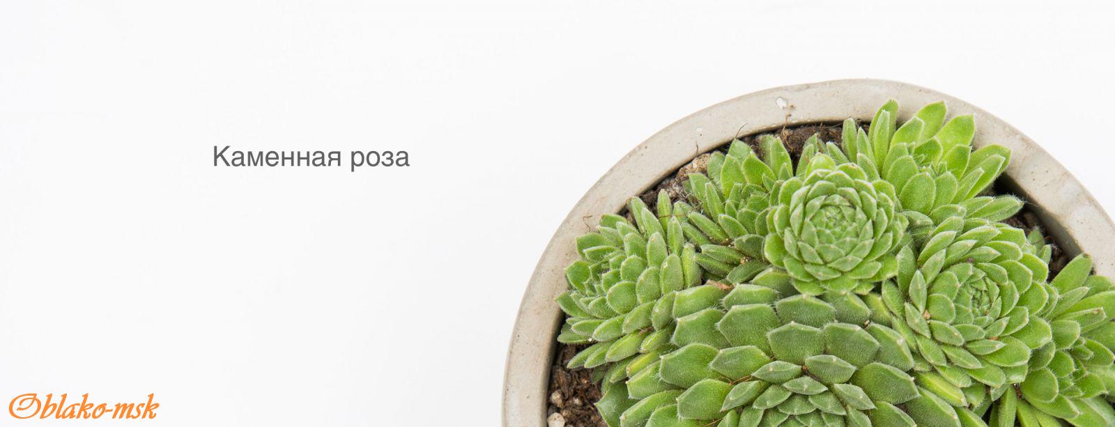 Xiaomi Smart Flower Monitor