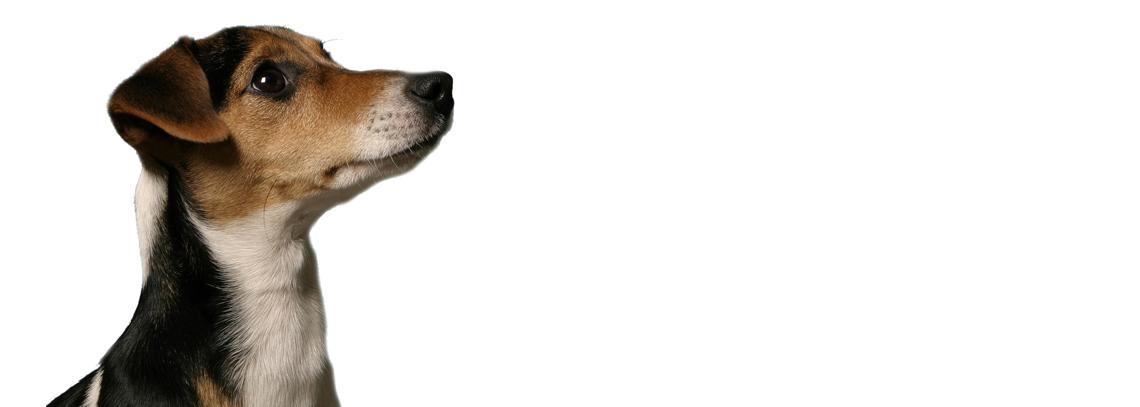 Пристрастие ко всему причудливому, ироничному, не соответствующему общепринятым стандартам изначально было заложено в идеологию фабрики. В имидже активно используется образ собаки, которая присутствует на многих страницах каталога. По легенде – собачка породы Джек-Рассел-терьер является не только владелицей компании, но и главным идеологом всего производственного процесса.
