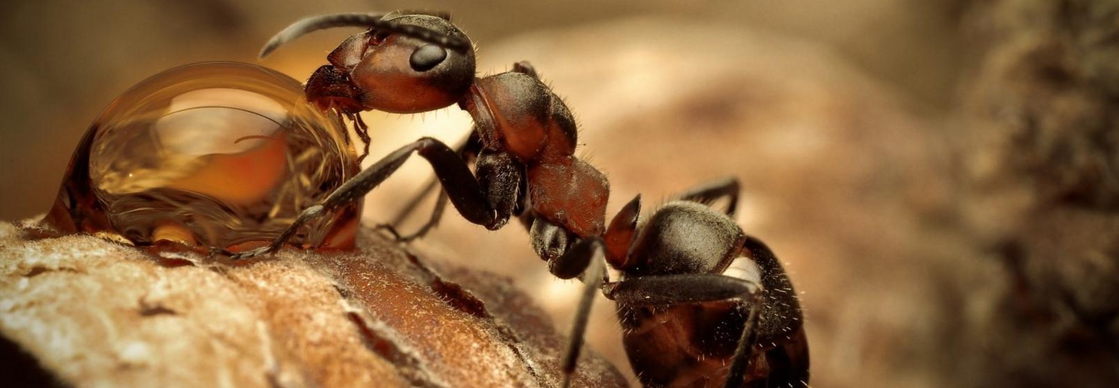 Выгодные цены на комплекты, формикарий + муравьи