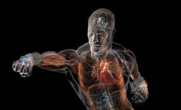 Откуда тело берет энергию