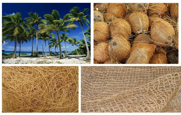 pryzha-iz-kokosa.jpg