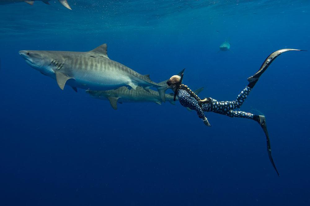 Гидрокостюм против акул