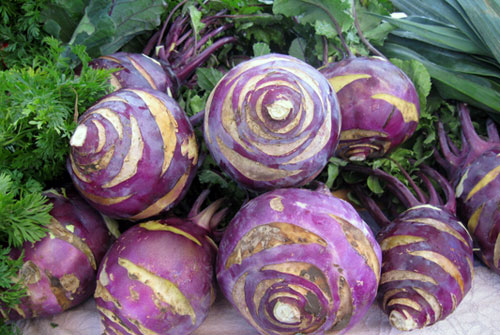 Сами выращиваем кольраби