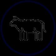 Покупка свежей говядины высшего сорта