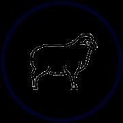 Свежее качественное мясо баранины