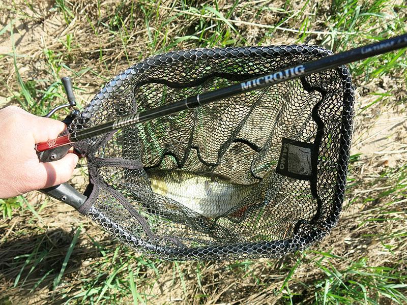 Первые голавлевые рыбалки