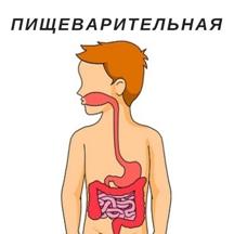 пищеварительная2.jpg