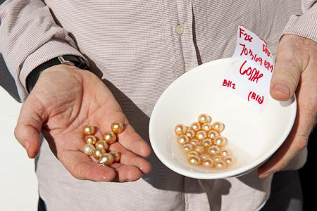 JB shows freshly harvested pearls
