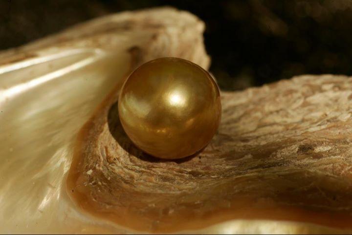 Хороший образец золотой жемчужины