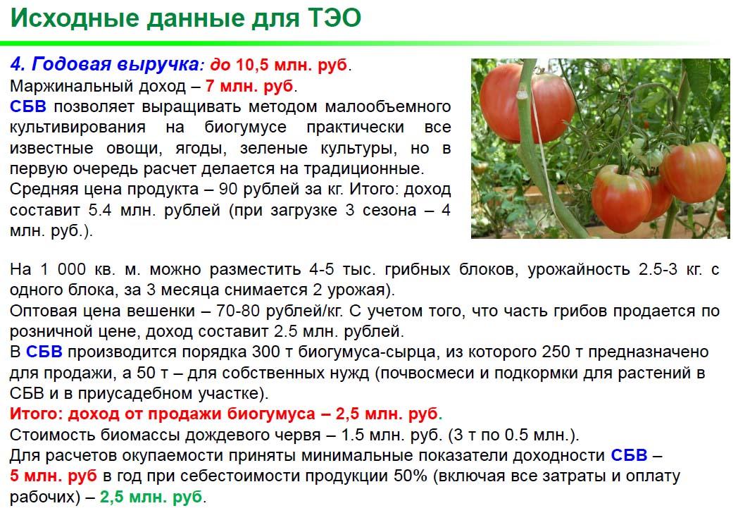 СБВ_ТЭО_6.jpg