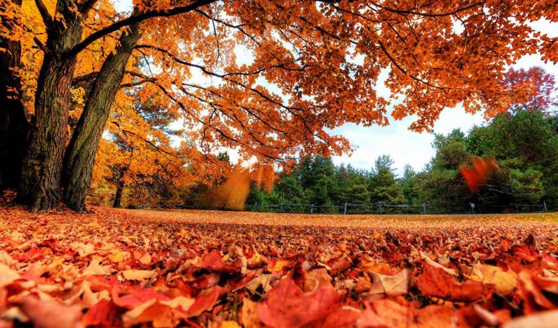 красиво в парке осенью.jpg